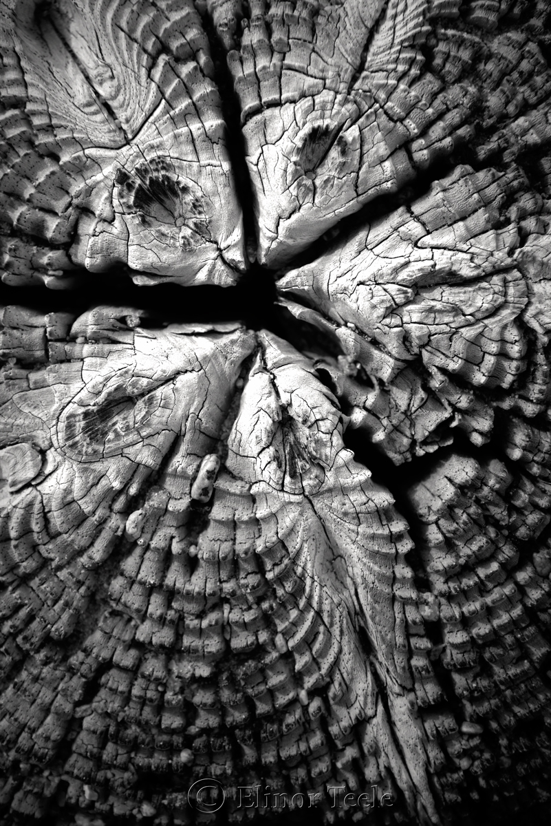 Wood Patterns 1