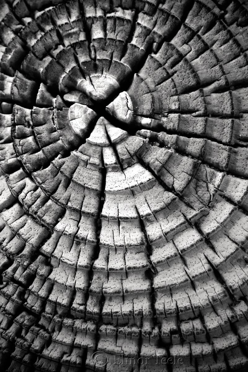 Wood Patterns 2