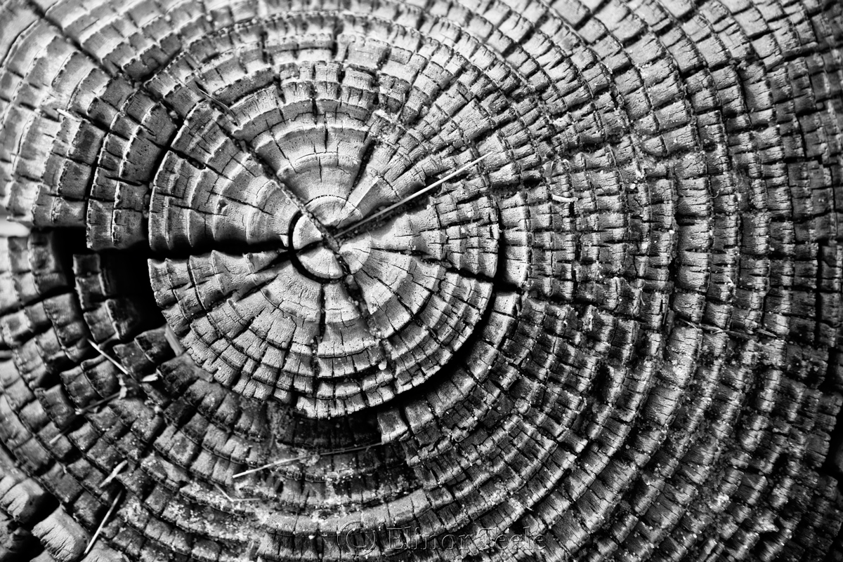 Wood Patterns 4