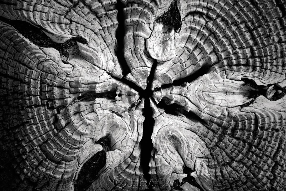 Wood Patterns 5