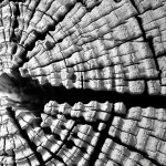 Wood Patterns 6