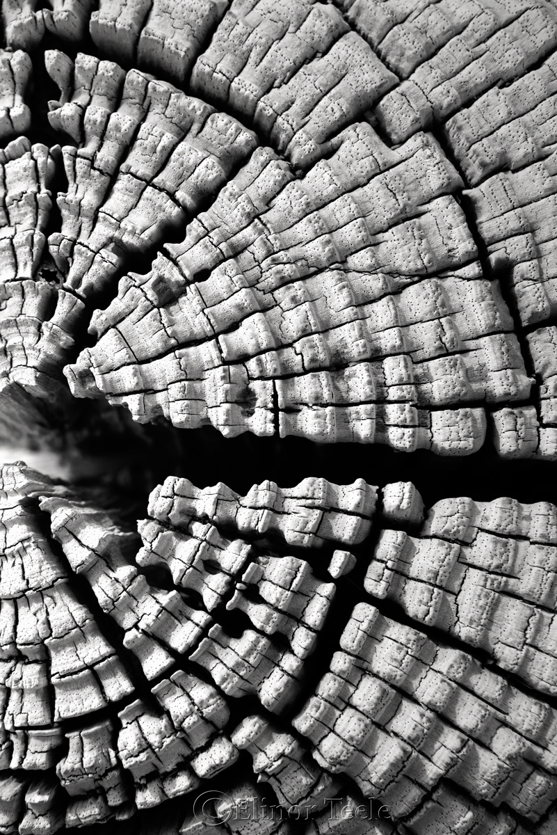 Wood Patterns 6