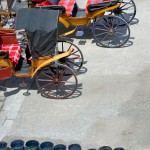 Clean Up, Horse-Drawn Carriages, Salzburg, Austria