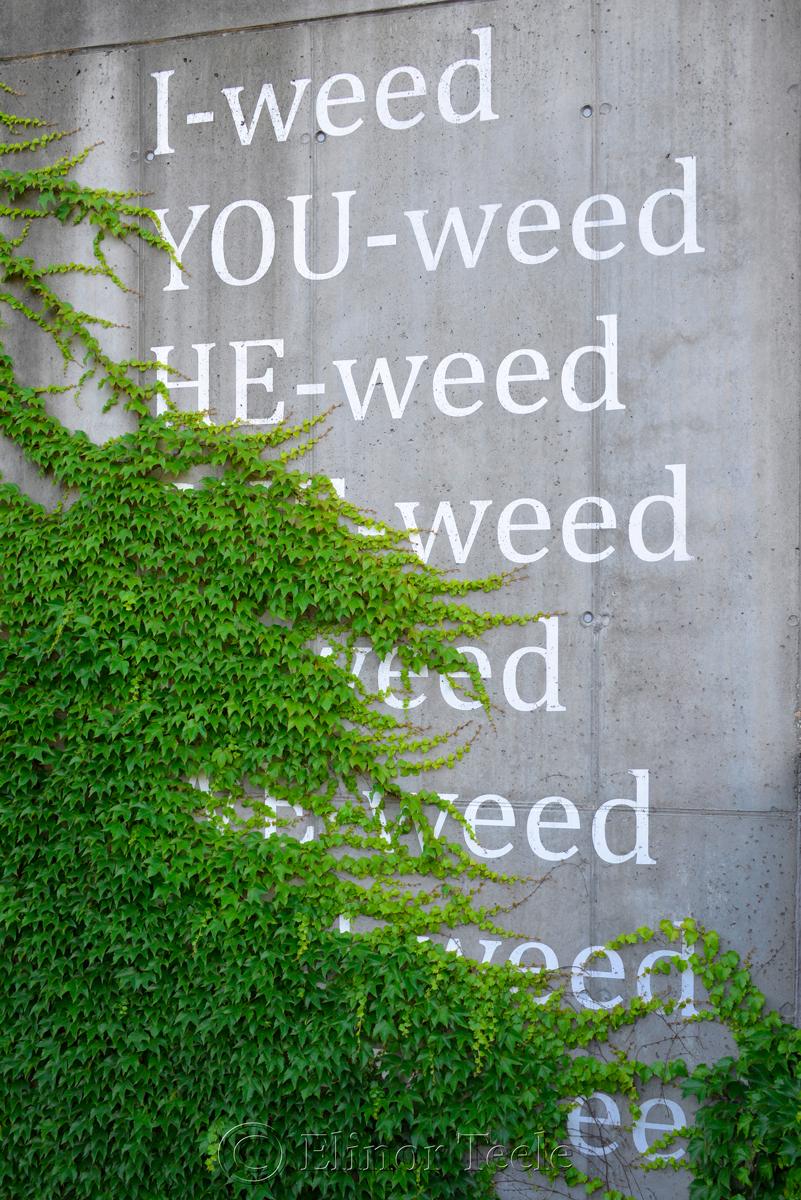 I-weed, Beton Blumen, Museumsquartier, Vienna, Austria