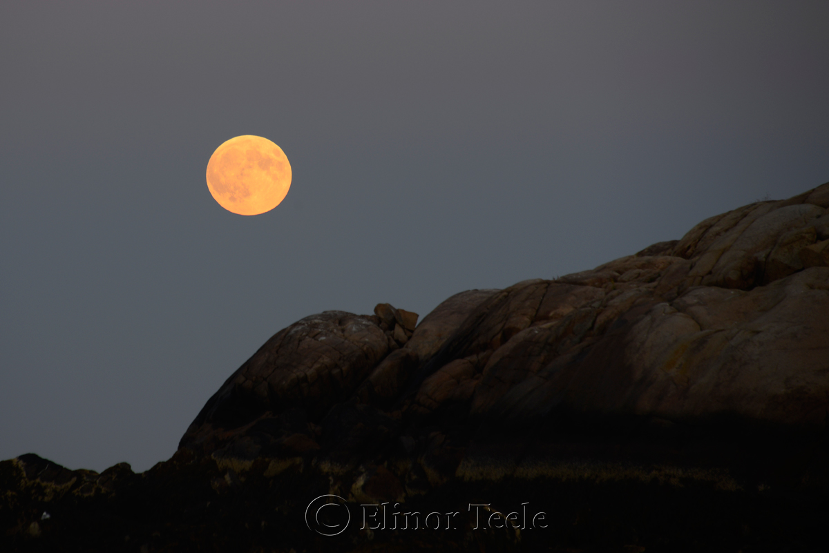 Full Moon, September 2015, Salt Island, Gloucester MA 2