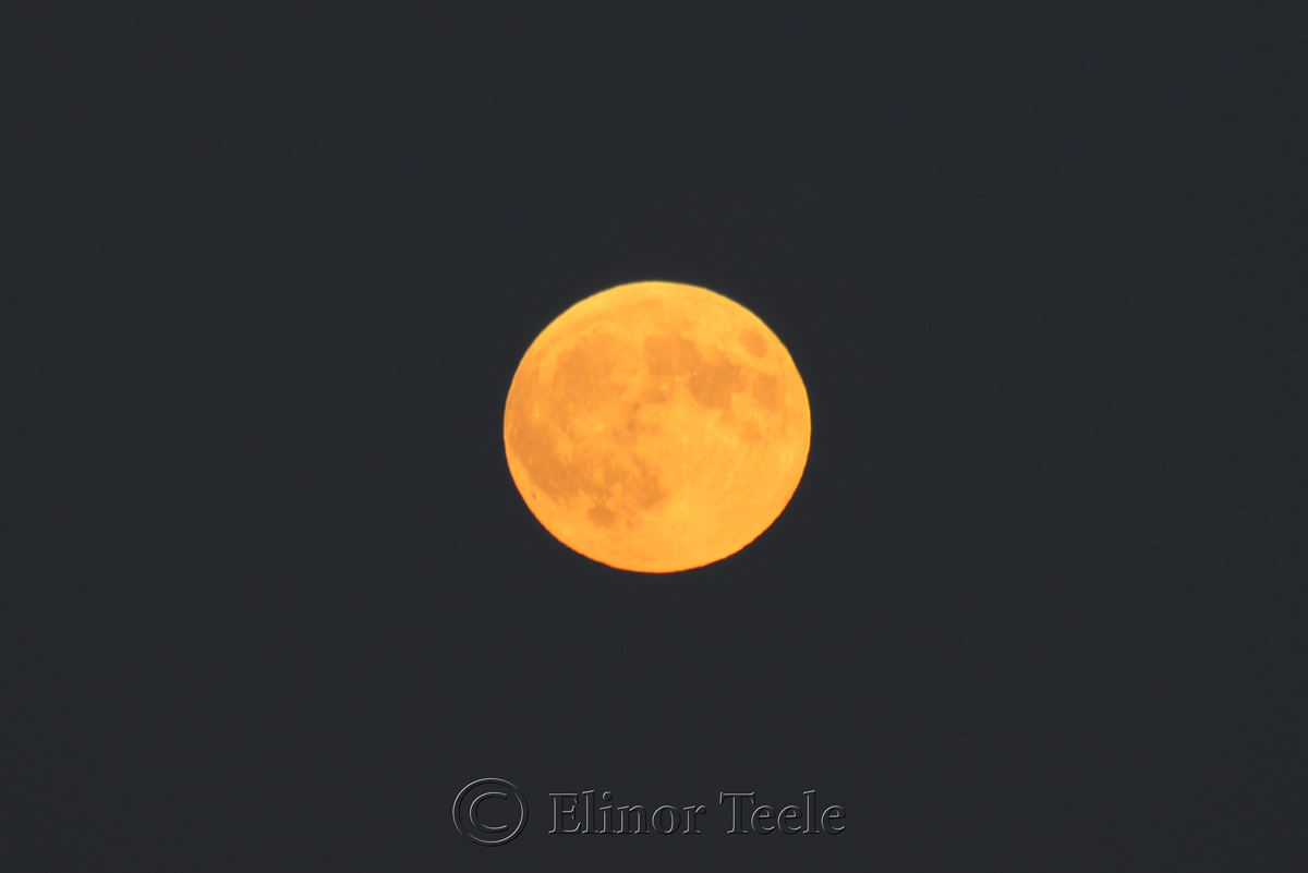 Full Moon, Waiting for the Eclipse, September 2015, Gloucester MA