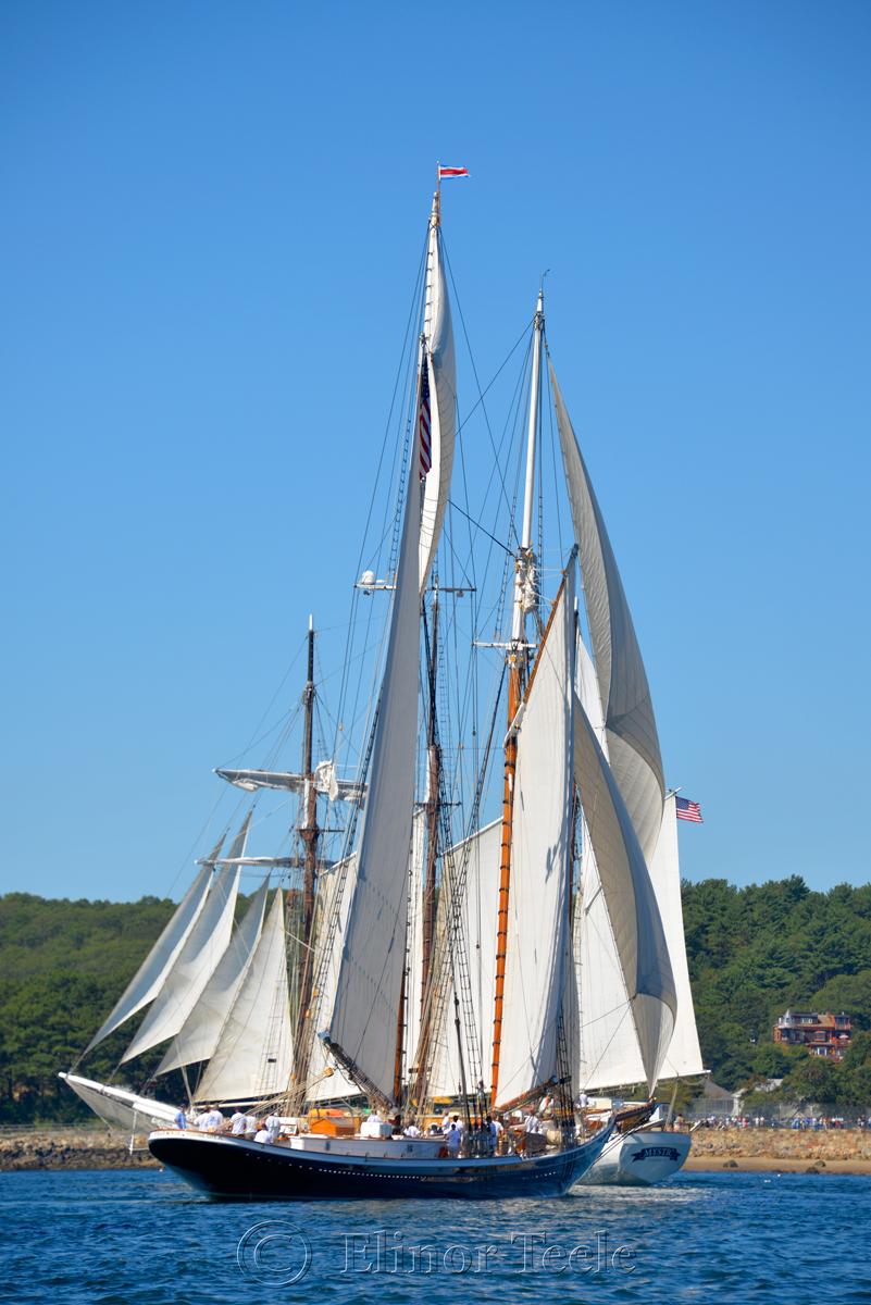 Parade of Sail, Gloucester Schooner Festival 2015 1