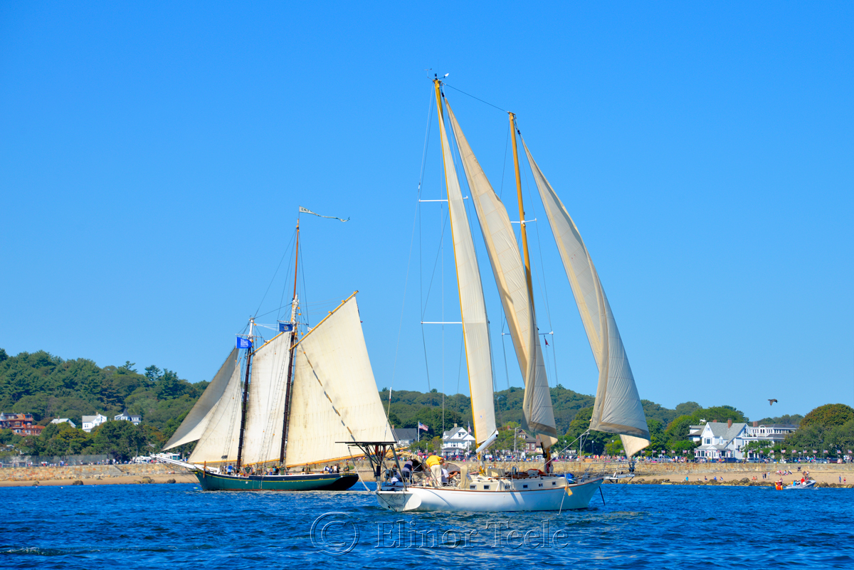 Parade of Sail, Gloucester Schooner Festival 2015 8