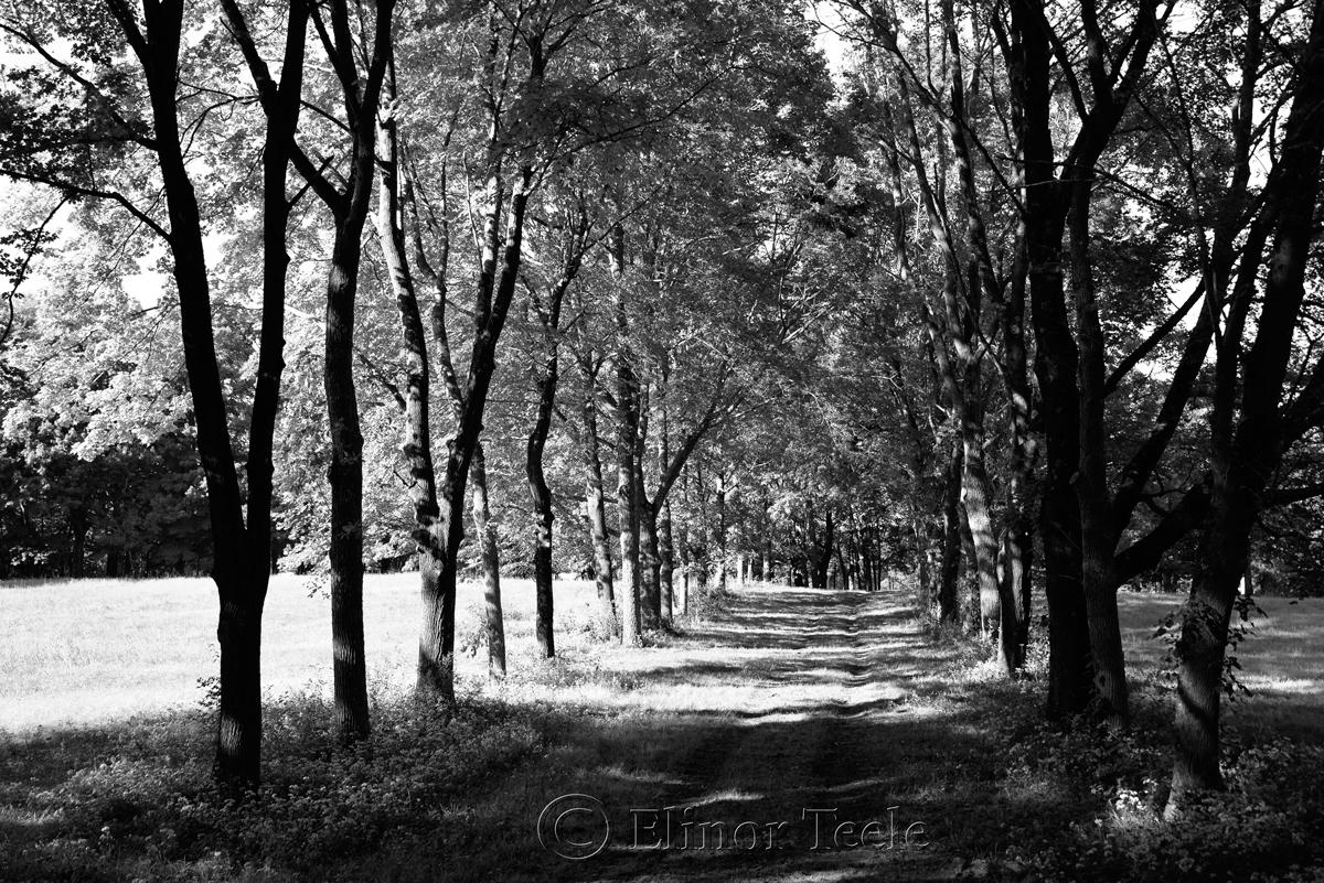 Appleton Farms in September (BW), Ipswich MA 1