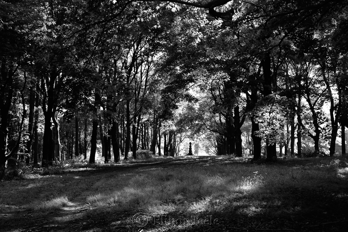 Appleton Farms in September (BW), Ipswich MA 2