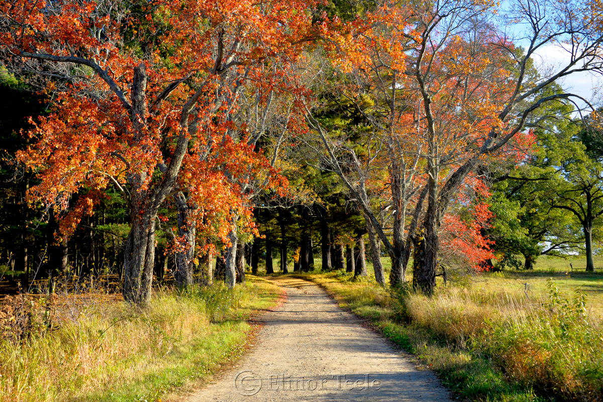 Fall Foliage – Briar Hill Path, Appleton Farms, Ipswich MA
