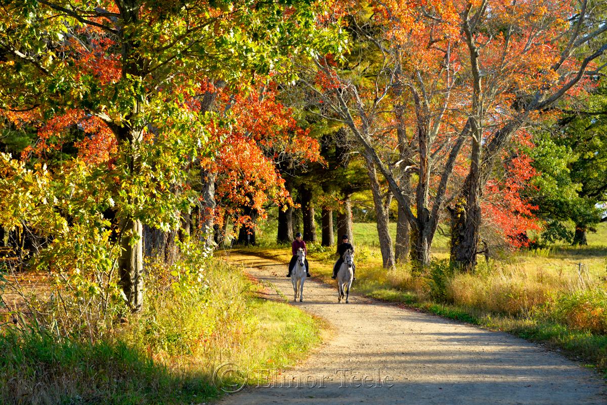 Fall Foliage – Horse Riding, Appleton Farms, Ipswich MA 1