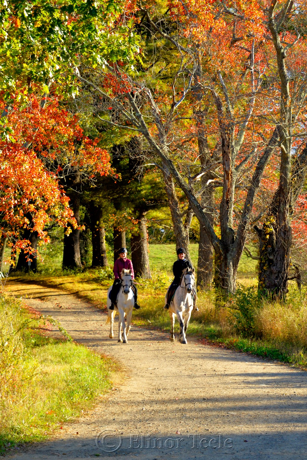 Fall Foliage – Horse Riding, Appleton Farms, Ipswich MA 2