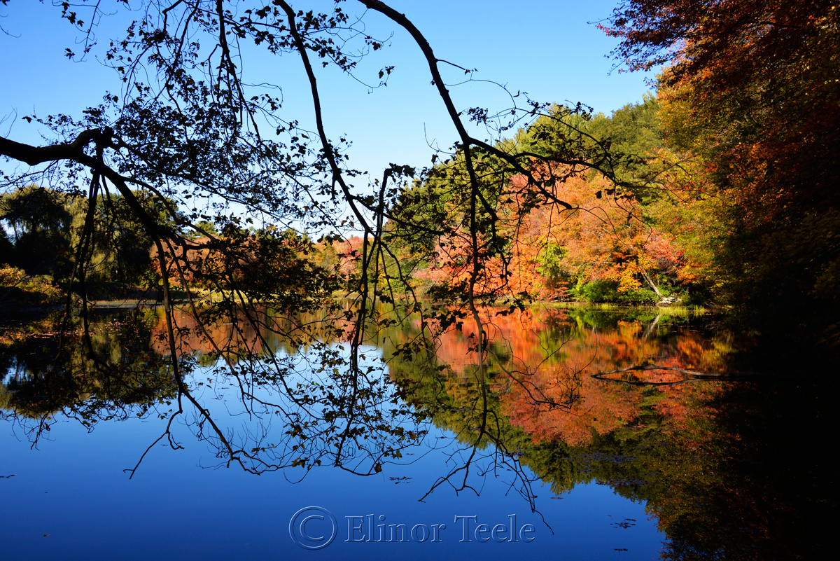 Fall Foliage, Macone's Pond, Concord MA 1