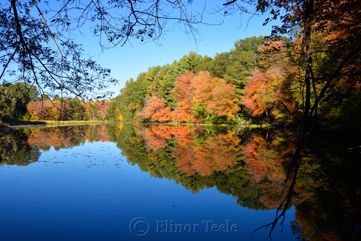Fall Foliage, Macone's Pond, Concord MA 2