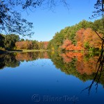 Fall Foliage, Macone's Pond, Concord MA 3