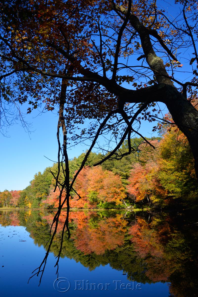 Fall Foliage, Macone's Pond, Concord MA 4