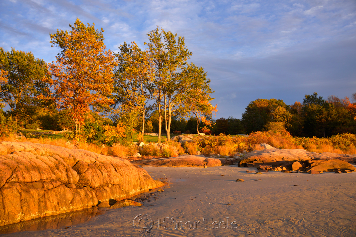 Fall Foliage - Pasture & Beach 1