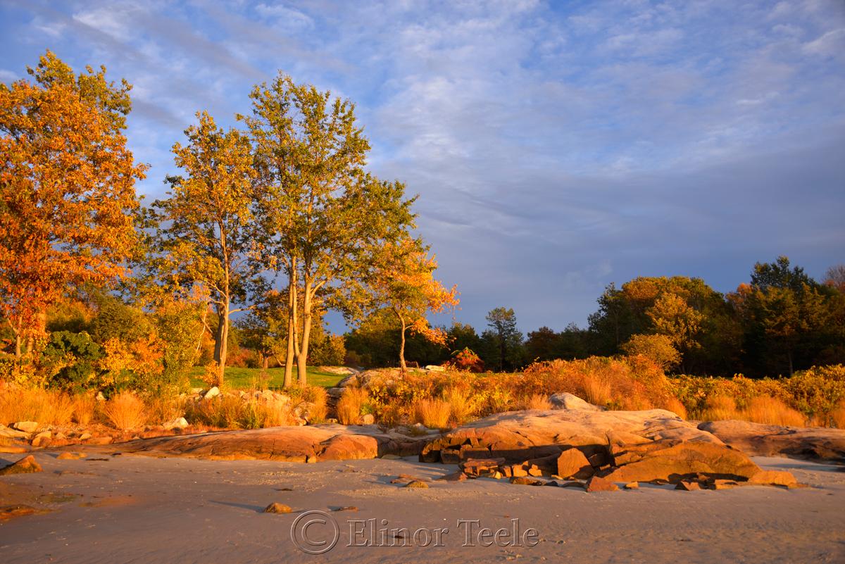 Fall Foliage – Pasture & Beach 2
