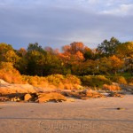 Fall Foliage - Pasture & Beach 3