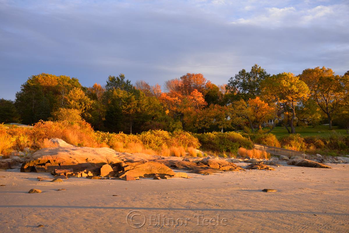Fall Foliage – Pasture & Beach 3