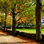 Fall Foliage - Stone Wall, Appleton Farms, Ipswich MA