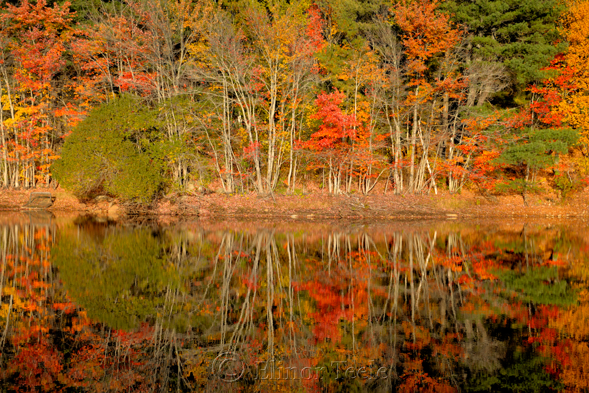 Fall Foliage, Goose Cove Reservoir, Gloucester MA 4