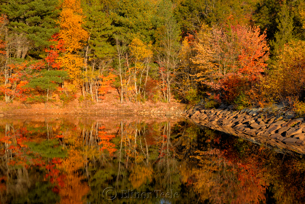 Fall Foliage – Goose Cove Reservoir, Gloucester MA 5