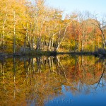 Fall Foliage, Goose Cove Reservoir Pond, Gloucester MA 1