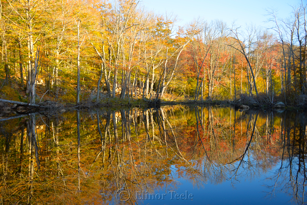 Fall Foliage – Goose Cove Reservoir Pond, Gloucester MA 1