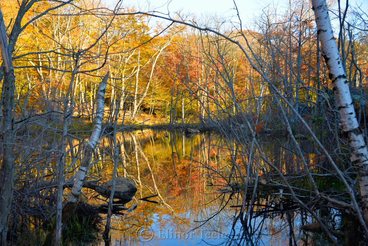 Fall Foliage, Goose Cove Reservoir Pond, Gloucester MA 2