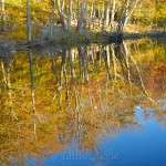 Fall Foliage, Goose Cove Reservoir Pond, Gloucester MA 3