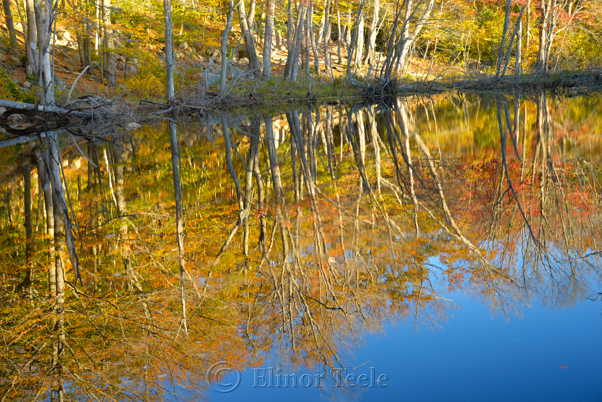 Fall Foliage – Goose Cove Reservoir Pond, Gloucester MA 3