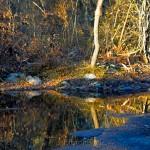 Rain Puddles, Goose Cove Reservoir, Gloucester MA 1