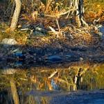 Rain Puddles, Goose Cove Reservoir, Gloucester MA 2