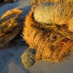 Golden Sea Grass & Footprint
