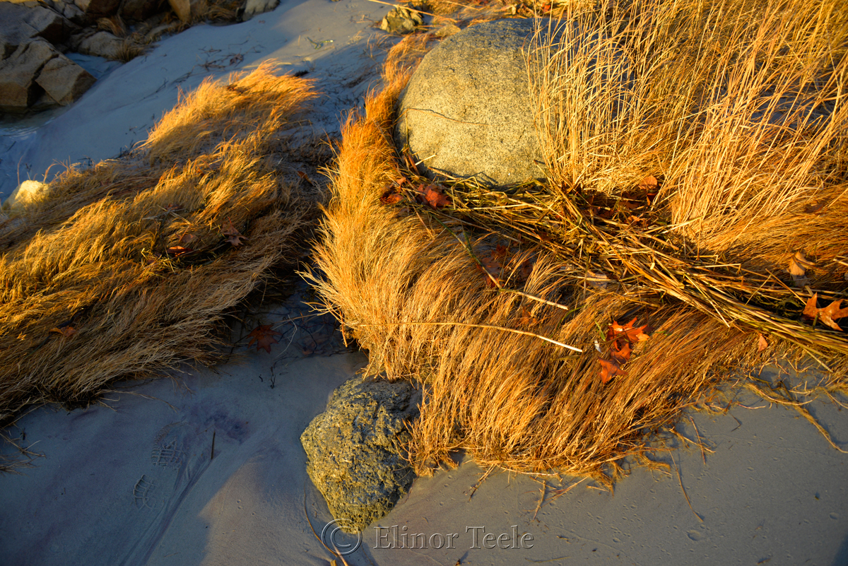 Golden Sea Grass & Footprint