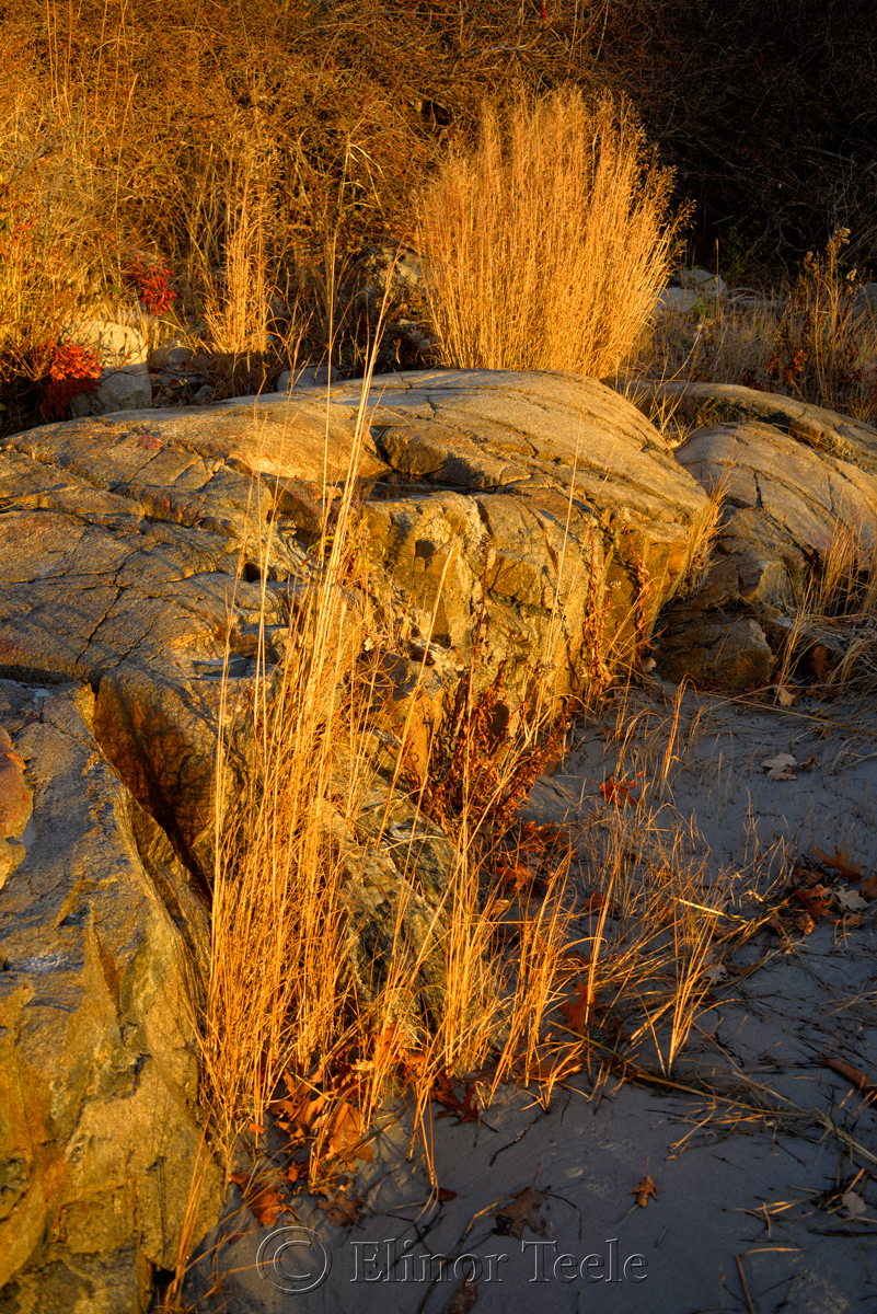 Golden Sea Grass & Rocks