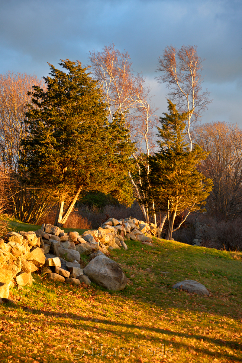 Stone Wall & Trees - December Light, Annisquam MA