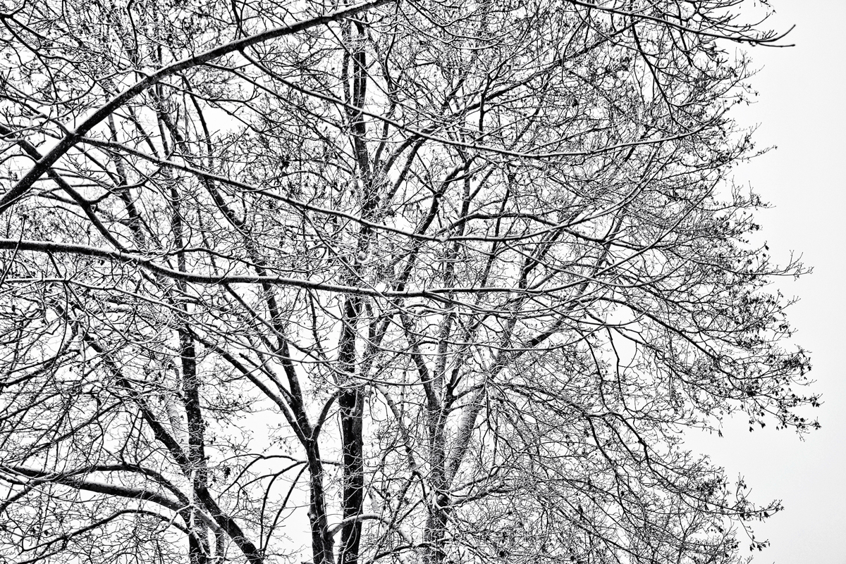 snowy trees � black amp white 1