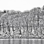 Snowy Trees - Black & White 3