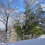 Winter Trees, January Snow, Annisquam MA