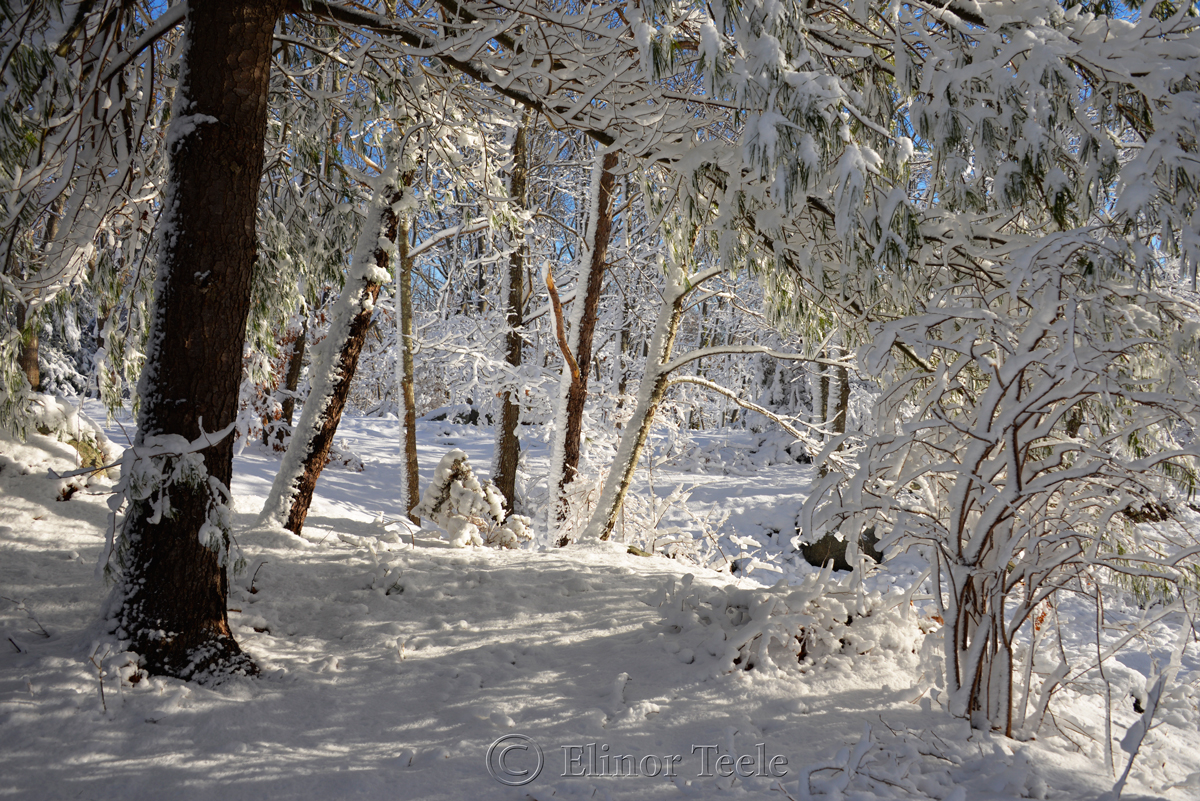New England Woods, February Snow 2016, Annisquam MA 1