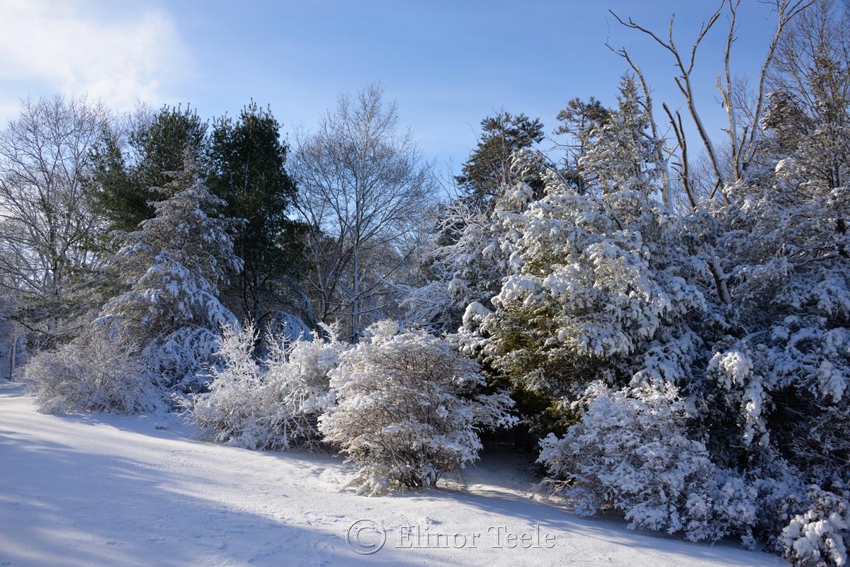 New England Woods, February Snow 2016, Annisquam MA 4