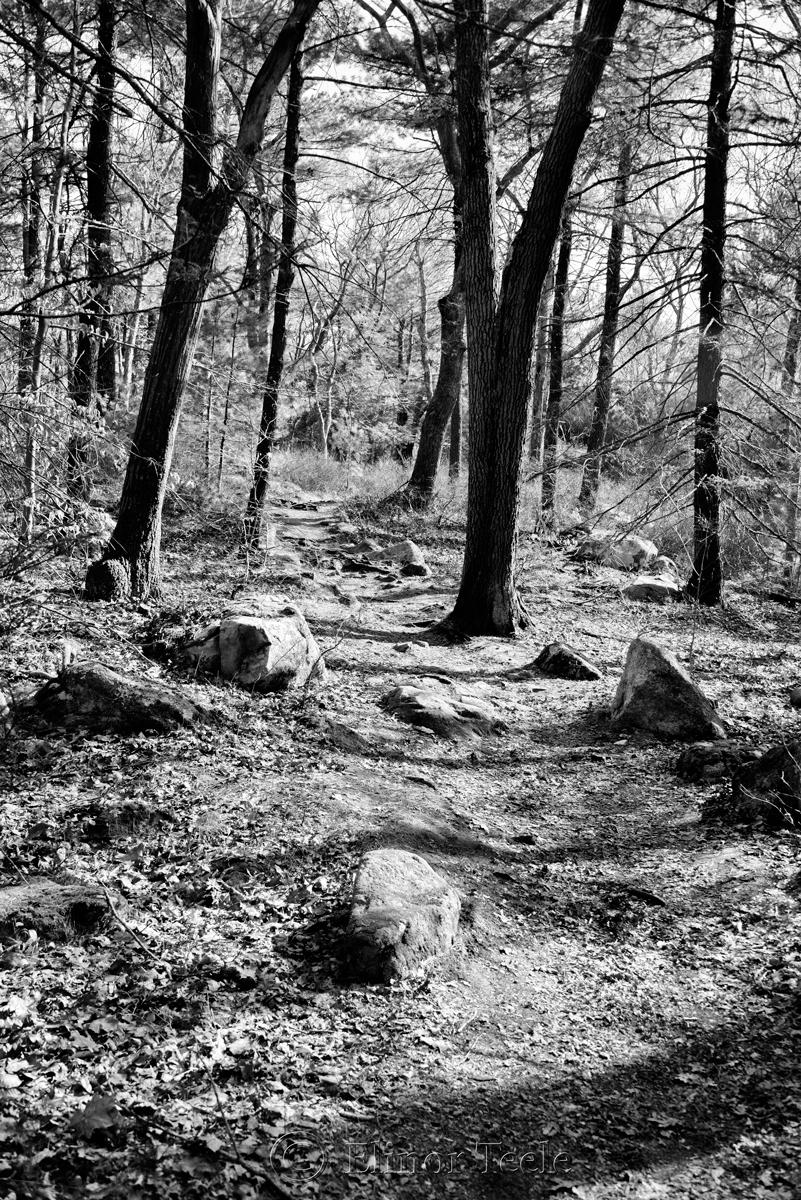 Ravenswood in Spring - Black & White