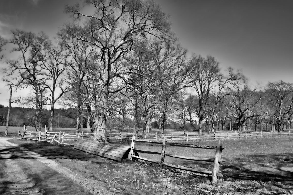 Appleton Farms in April 3
