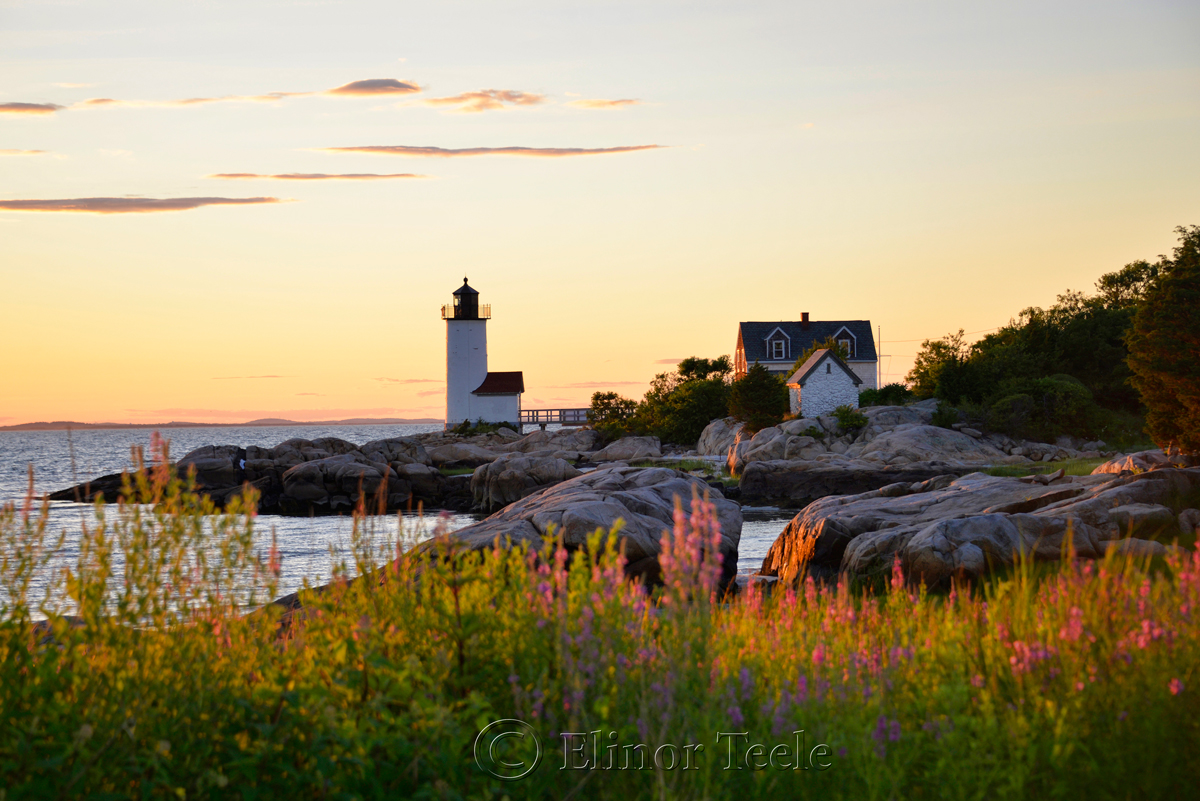 squam-creative-teele-lighthouse-sunset-flowers