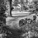 Pasture - Black & White 2