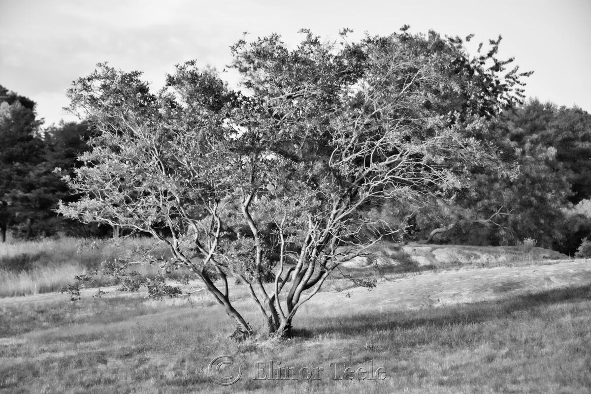 Pasture - Black & White 4