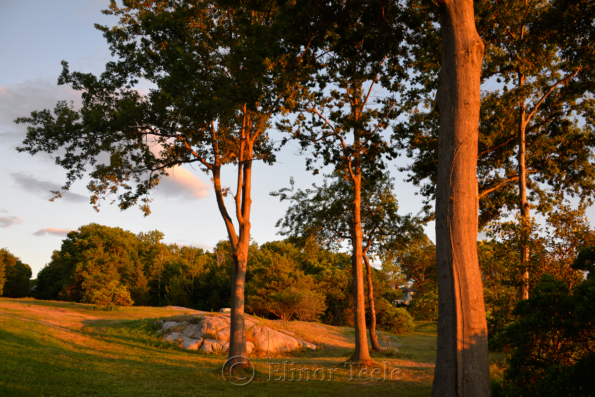 Pasture at the Golden Hour, Annisquam MA 1